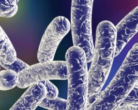 legionella bacteria